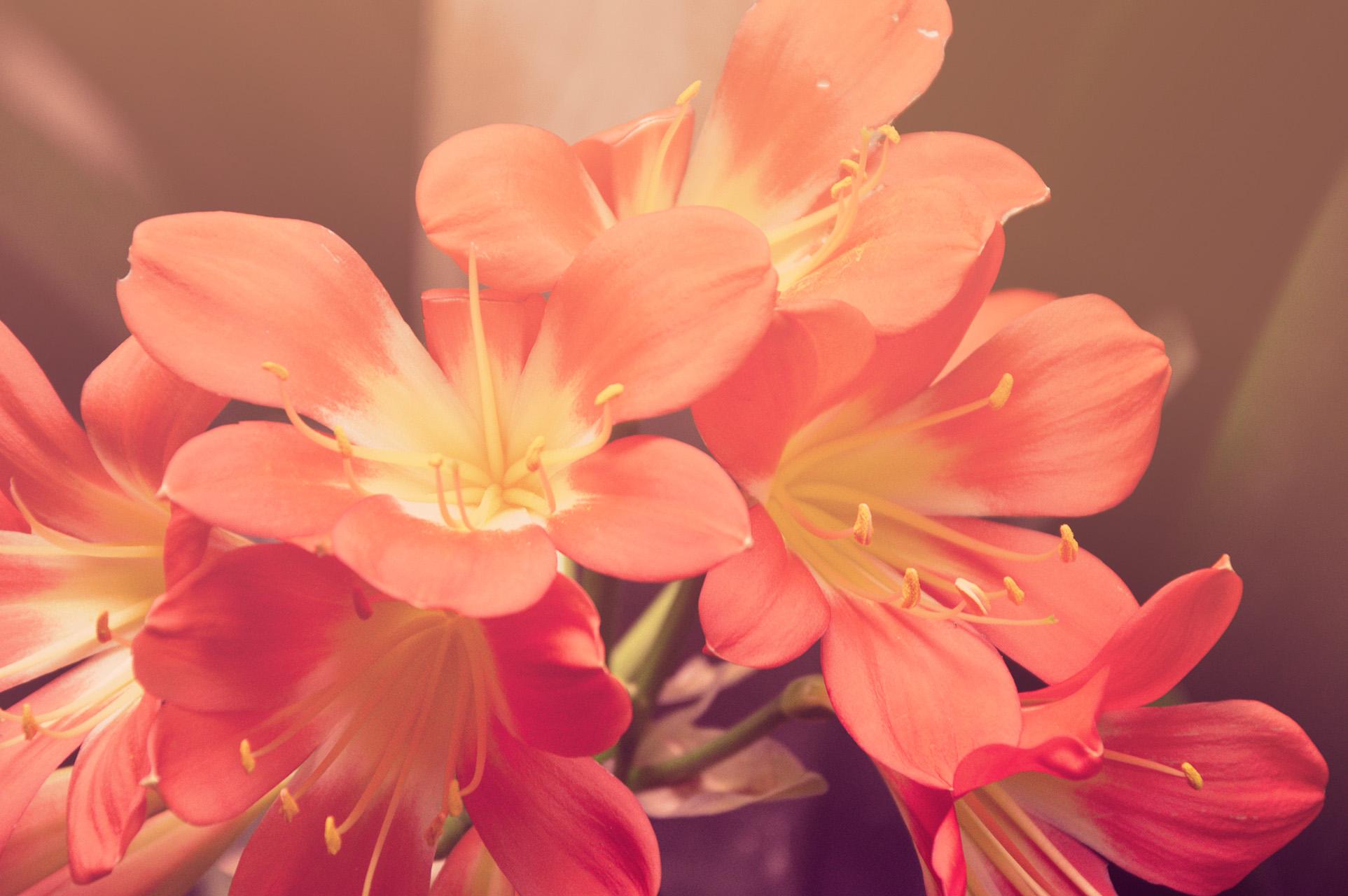 17315 Tips for a Perfect Garden